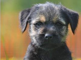 Hundeschule Geringswalde