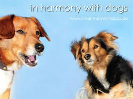 Hundeschule Hamburg - In harmony with dogs