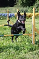 Foto 2 Hundeschule Harmony - Der Weg ist das Ziel