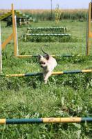 Foto 3 Hundeschule Harmony - Der Weg ist das Ziel