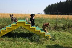 Foto 4 Hundeschule Harmony - Der Weg ist das Ziel