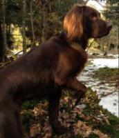 Hundeschule für Jagd- und Familienhunde