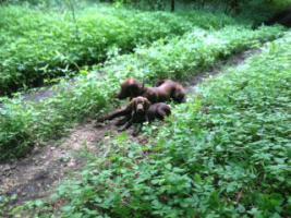 Foto 2 Hundeschule für Jagd- und Familienhunde
