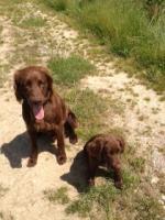 Foto 3 Hundeschule für Jagd- und Familienhunde