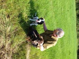 Foto 4 Hundeschule für Jagd- und Familienhunde
