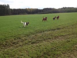 Foto 6 Hundeschule für Jagd- und Familienhunde