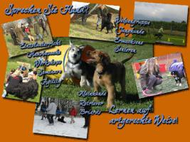Foto 2 Hundeschule Team-Ideal
