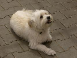 Hundeschule nach neuesten Erkenntnissen-ohne laute Kommandos-ohne Leckerlie-NEU! Team-Checl!