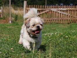 Hundesitten in und um Neumünster