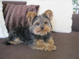 Hundesitter von Montag - Mittwoch dringend gesucht !
