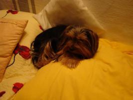 Hundesitter für Urlaubszeiten