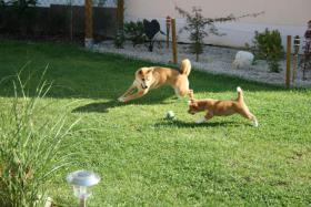 Hundesitter / Hundebetreuung