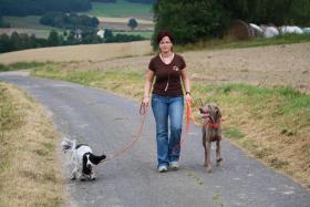 Foto 2 Hundesitter / Hundebetreuung