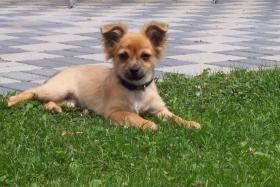 Foto 4 Hundesitter / Hundebetreuung