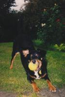 Foto 2 Hundesitter ( Vorwiegend Abends/Nachts )