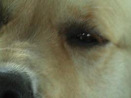 Foto 2 Hundesitting