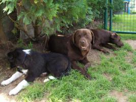 Foto 7 Hundesitting!!!