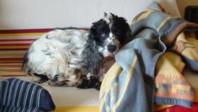 Hundesitting(Stundenweise), Gassigehen.