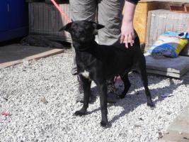 Hundesittung/Pflegestelle für Hund