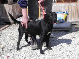 Foto 2 Hundesittung/Pflegestelle für Hund