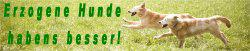 Hundetraining vor Ort-ohne Hundeplatz, ohne Leckerli!Rosenheim und Umgebung