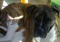 Foto 6 Hundetraining einmal anders...