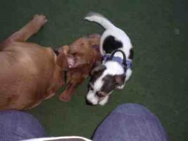 Foto 8 Hundetraining einmal anders...