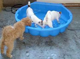 Foto 9 Hundetraining einmal anders...