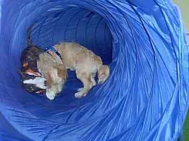 Foto 10 Hundetraining einmal anders...