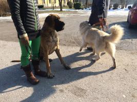 Hundetraining-mobil v.Ort-o.Leckerli-o.Hundeplatz-nonverbal!
