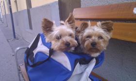 Hundetransport Katzentransport Tierarzt
