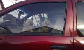 Foto 2 Hundetransport Katzentransport Tierarzt