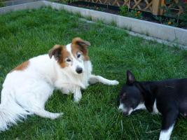 Hundewelpen ab 09.07.11 besichtigen