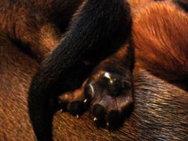 Foto 2 Hundewelpen, Kurzhaar
