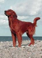 Foto 2 Hundezubehör und eleganter Rüde
