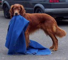 Foto 3 Hundezubehör und eleganter Rüde
