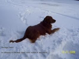 Foto 4 Hundezubehör und eleganter Rüde