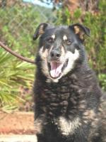 Husky Mix YAGO sucht ein Zuhause oder PS