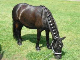 Foto 2 Ich suche eine  Reitbeteiligung oder Plegebeteiligung für unsere Ponystute