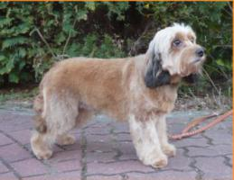 Ich vermisse mein Hund Knopka !  ( Hündin )