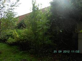 Foto 9 Idyllisches Gartenhaus Wochenendhaus Ferienhaus in Podewall