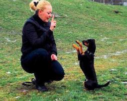 Foto 2 Ihr Hund hat probleme mit Artgenossen ?