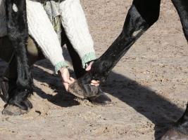 Foto 2 Institut für ganzheitliche Pferdegesundheit