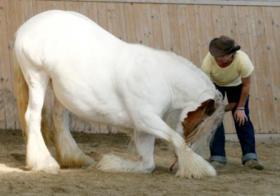 Foto 2 Irgendwelche Probleme mit deinem Pferd?