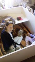 Foto 5 Irish Soft Coated Wheaten Terrier Welpen zu verkaufen