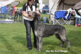 Foto 6 Irish Wolfhound Welpen