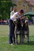 Foto 7 Irish Wolfhound Welpen