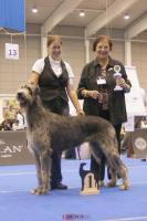 Foto 8 Irish Wolfhound Welpen