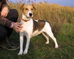 Irisz- eine tapfere Hundemama!
