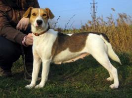 Foto 4 Irisz- eine tapfere Hundemama!